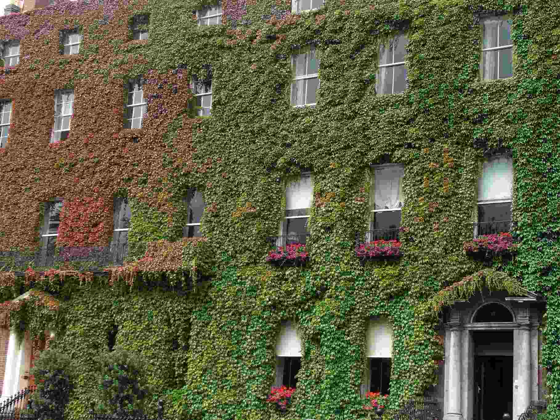 Fachada verde en Dublín