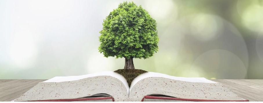 Portada informe Educación y Sostenibilidad