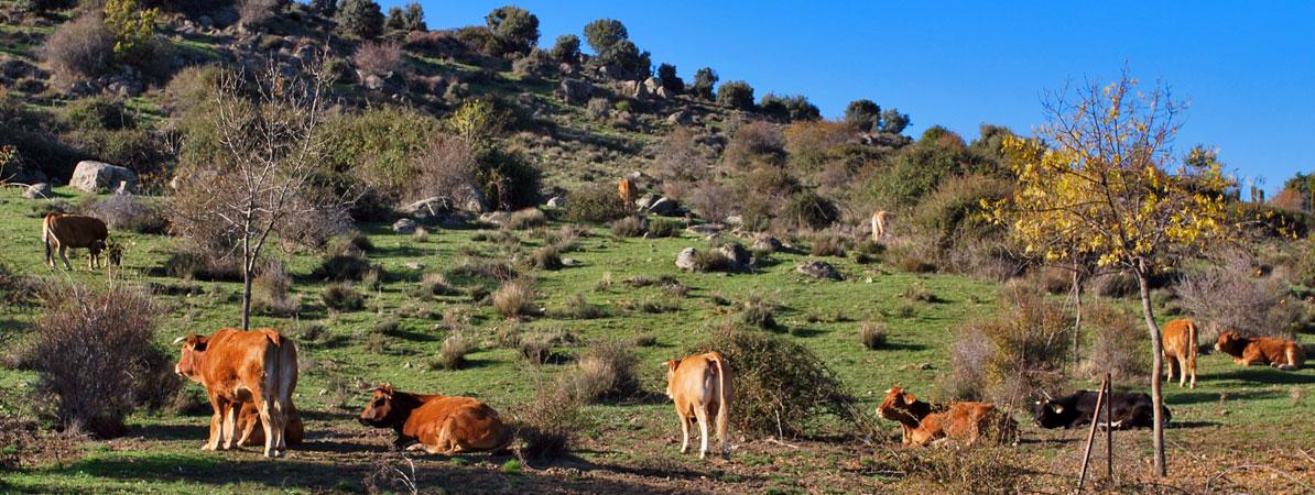 Procesos participativos para la transición agroecológica en ENPs